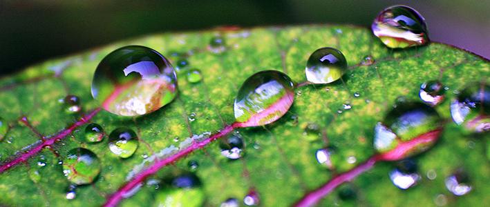 hydrophobic-leaf